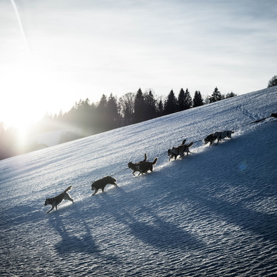 Mushing with Nordik Jura (2018)